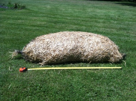 Barley Straw Roll