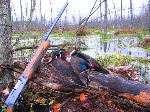 duck_water_fowl_hunt